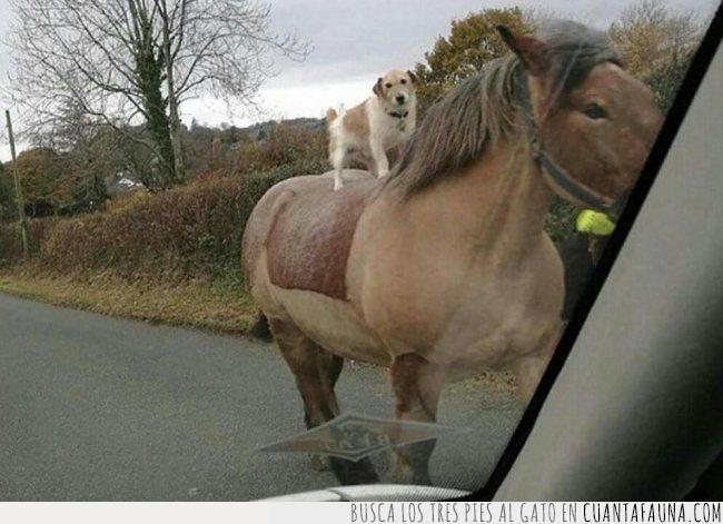 caballo,carretera,demasiadas,galope,montar,muchas,perro,preguntas