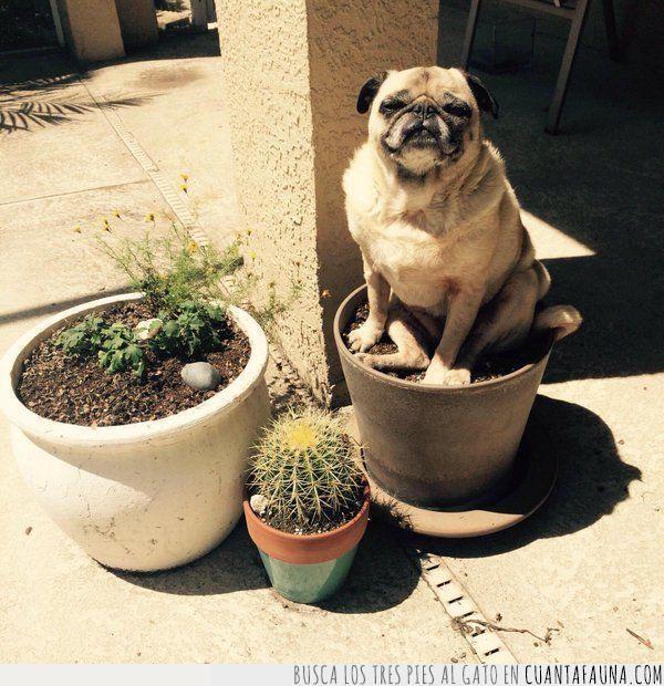 contento,empezar,flor,florecer,jardineria,planta,primavera,pug,regar,sol