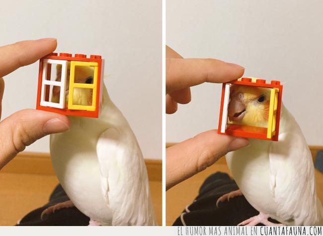 abrir,ave,cerrar,juguete,kego,pájaro,ventana