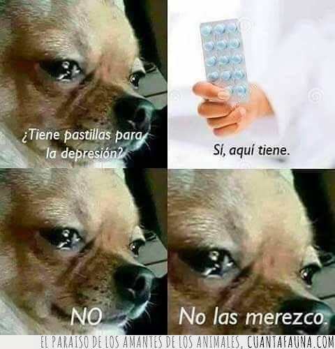 cara,depresión,lágrimas,merecer,ojos,pastillas,perro