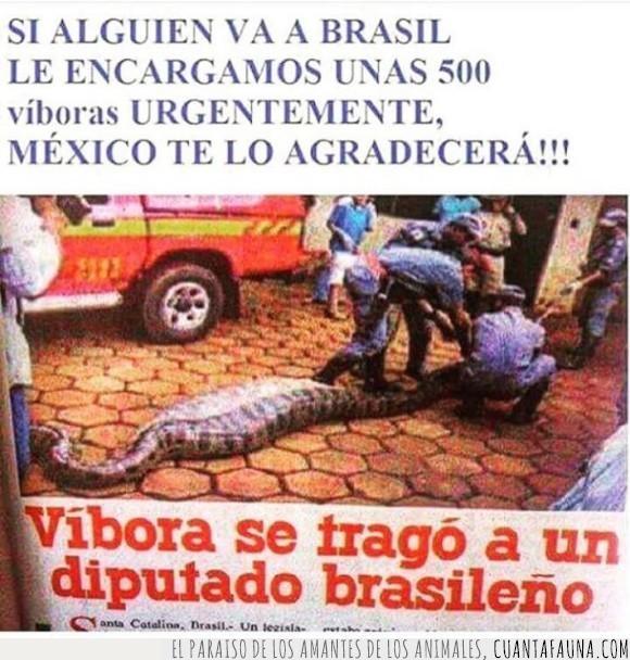 brasil,méxico,noticia,político,titular,tragar,víbora