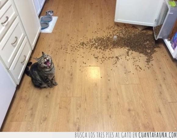 comida,desastre,desparramado,gato,tirar
