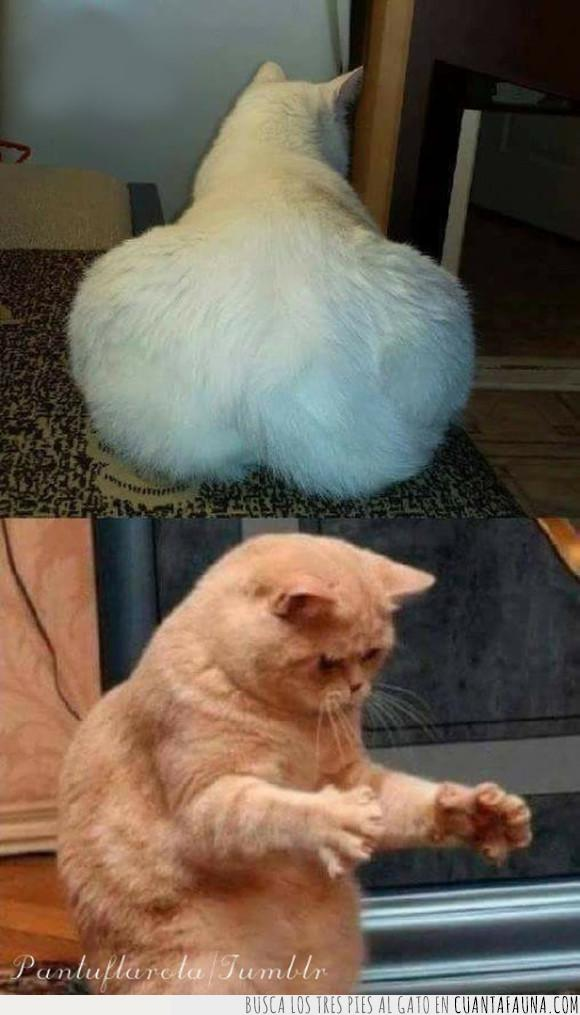 gato,humor,trasero
