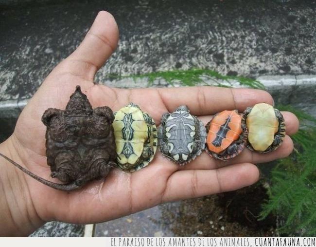 barriga,colores,mejor,naranja,tortuga,ver,verde