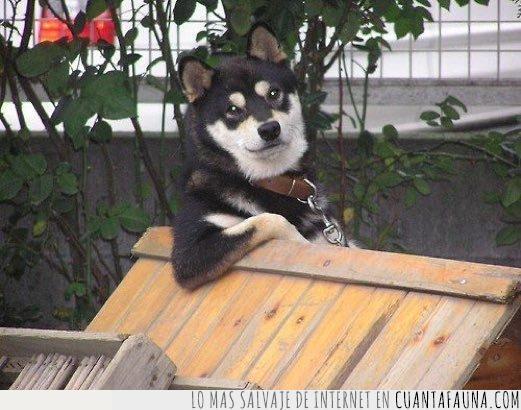 codo,invitar,ligar,pasar,perro,pipican,tarde