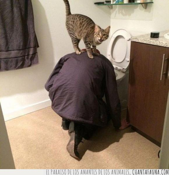 bonito,gato,noches de desenfreno...,vomitando,whiskas