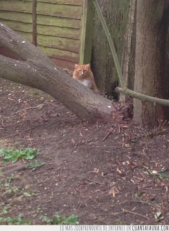 árbol,cara,gato,Nicholas Cage