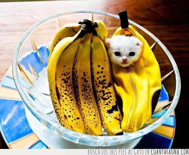 amarillo,blanco,bol,comer,cremallera,cristal,estuche,fruta,frutera,gato,plátano