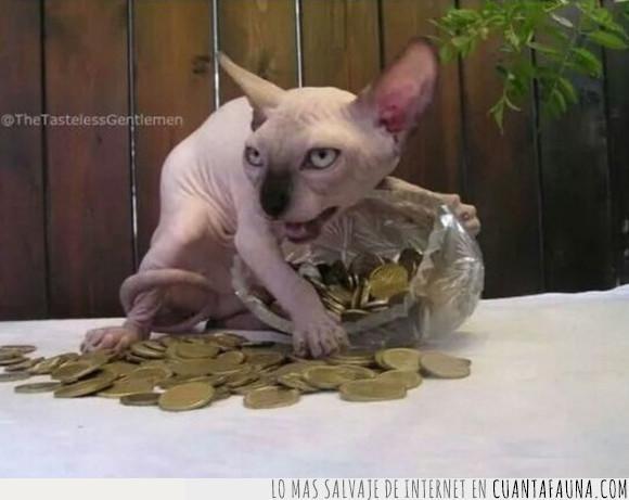 avaricia,gato,monedas,sphinx