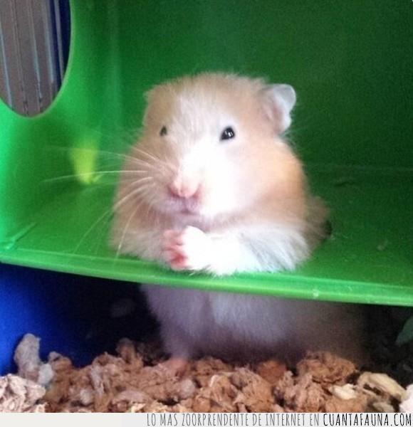 hamster,rezar