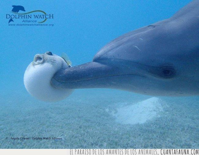 delfín,globo,golpear,lucha,lunes,pez,versus,vida