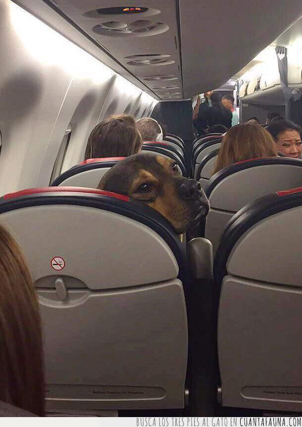 asiento,avión,cara,decir,detrás,mirar,molestar,patadas,pedir,perro,silla,volar