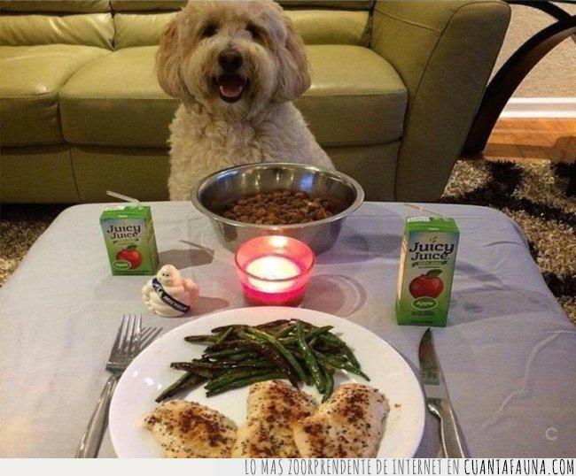 cena,cita,comida,compartir,idea,mesa,noche,pareja,perfecta,perro