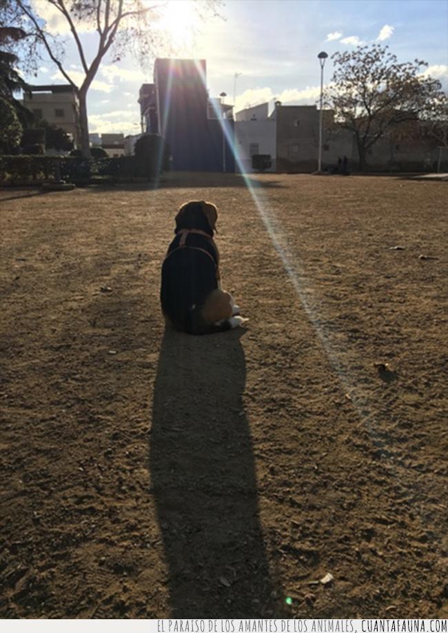 dios,divina,elegida,iluminar,luz,parque,perra,rayo,señal,solo