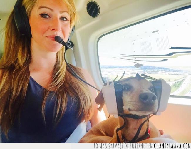 aterriza como puedas,casco,copiloto,miedo,pasar,perro,seguridad,volar,vuelo