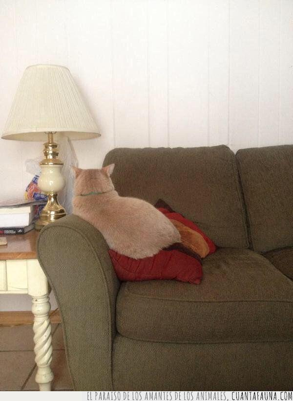 cojín,contigo,enfadar,enfado,espalda,gato,sentar,sofá