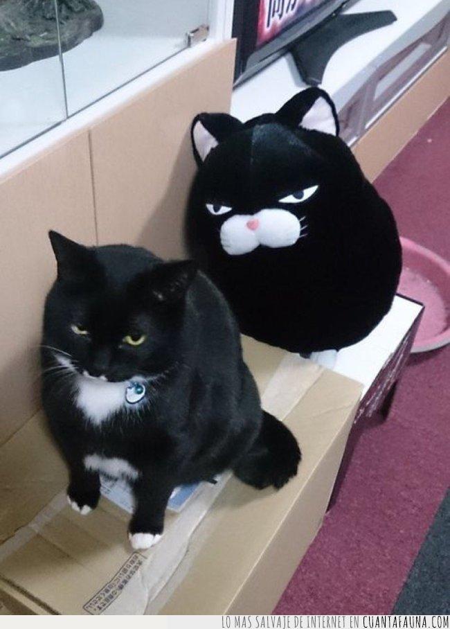 advertir,amenaza,avisar,caja,cartón,detrás,gato,negro,peluche,tuyo