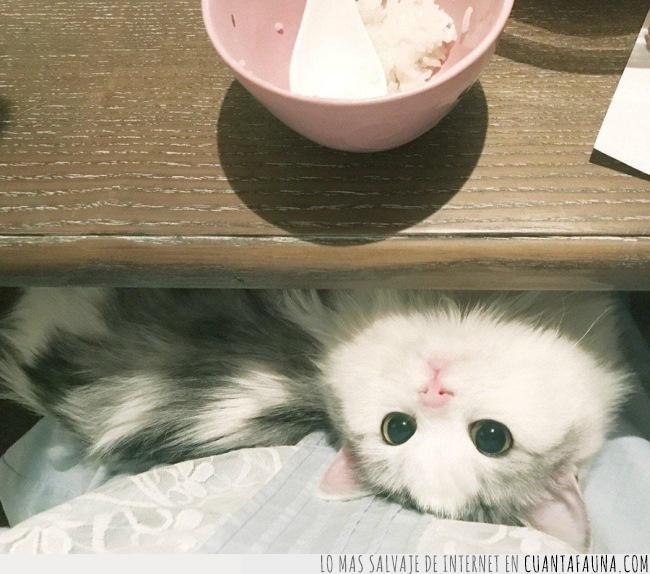 cabeza,comer,debajo,gato,hola,madera,mesa,mirar,revés,sacar,saludar