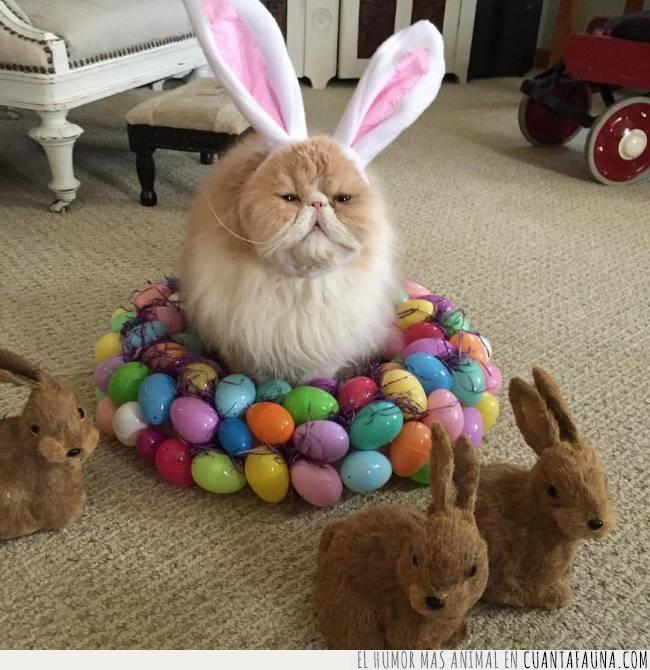 colores,conejo,corona,diadema,disfraz,gato,huevos,marrón,montaña,orejas,pascua,peluche
