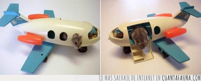 avión,cabina,despegar,hamster,juguete,volar
