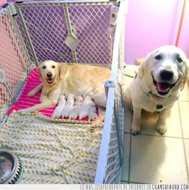 cachorros,cuna,humanos,orgullo,paternidad,perros,ver