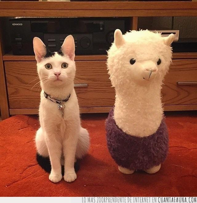 alpaca,amigo,conseguir,llama,peluche,regalo,solitario,solo