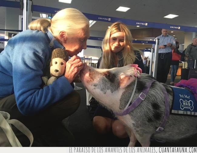 aeropuerto,ayuda,cerdo,delicioso,estados unidos,san francisco,terapia,turistas,viajantes