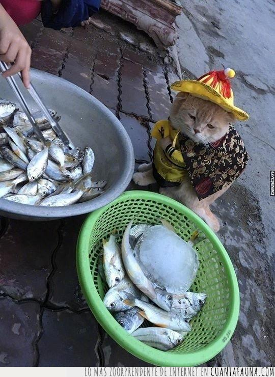 alimentar,comer,comida,cuestión,deber,disfrutar,gato,gourmet,pescado,pez,placer