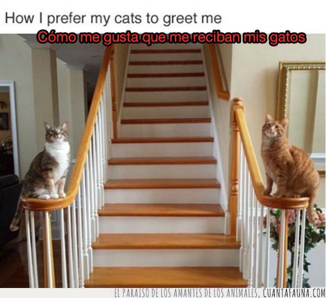 decepción,escaleras,gatos,llegar,recibimiento,recibir,trabajo