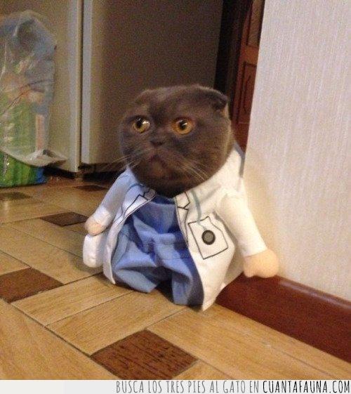 bata,confianza,consultar,disfraz,doctor,gato,médico,mundo,opinión,salud,segunda,visitar