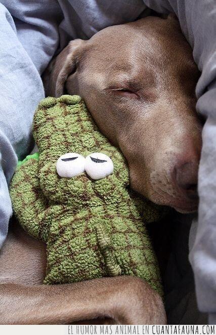 cocodrilo,dormir,hacer,mismo,peluche,perro,siempre