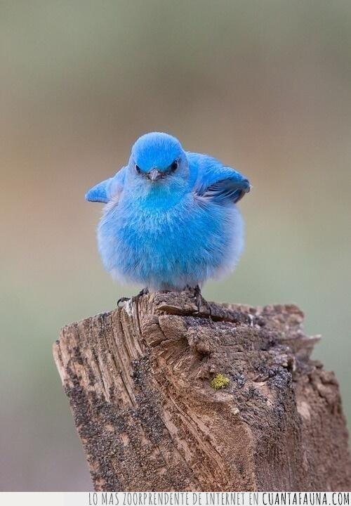 azul,bluebird,icono,imagen,logo,pájaro,representación,tuitear,twitter