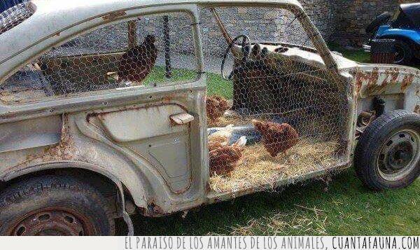aprovechar,chasis,coche,gallina,granero,granja,huevos,oxidar,reciclar