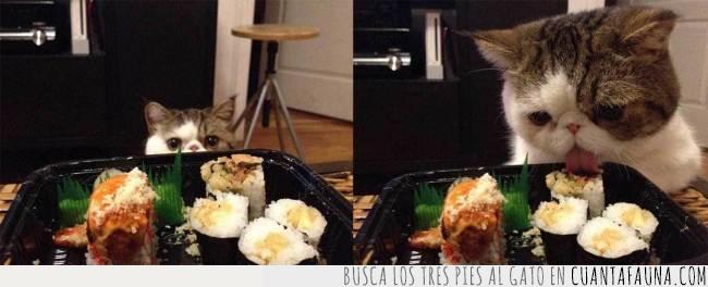 comer,comida,gato,lamer,lengua,mirar,robar,sushi
