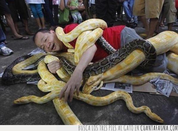 caer,falso,hombre,mal,reír,serpiente,simpatía,sonreír