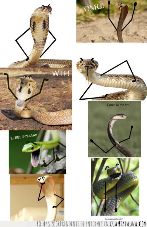 atrás,brazos,caras,decepción,dibujo,evolución,memes,monigote,paso,serpiente