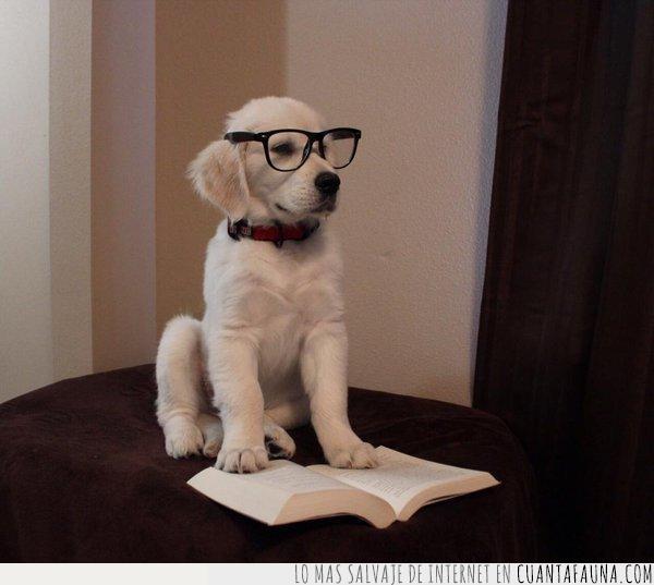 cara,expresión,gafas,intentar,leer,libro,mirada,perro,ruido