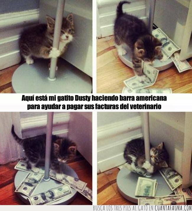 americana,barra,deudas,dinero,facturas,gato,pagar,pole dance,veterinario