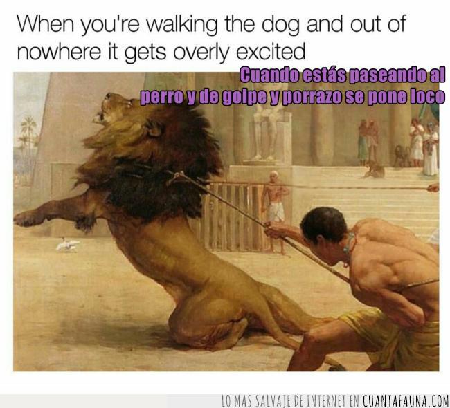 desbocado,dibujo,león,loco,nervioso,pasear,perro,romano,salvaje