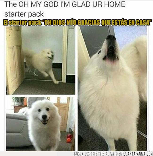 agradecido,casa,épico,ladridos,llegar,nervios,perro,recibir,starter pack