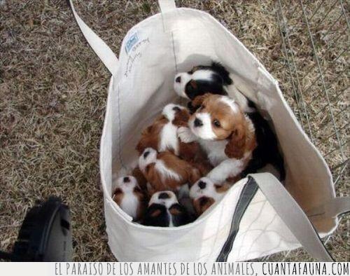 bolsa,cachorros,coger,llena,llevar,pequeños,traer