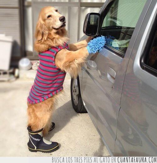 botas,coche,día,guante,lavar,libre,limpiar,perro,ropa,vacaciones,vestido