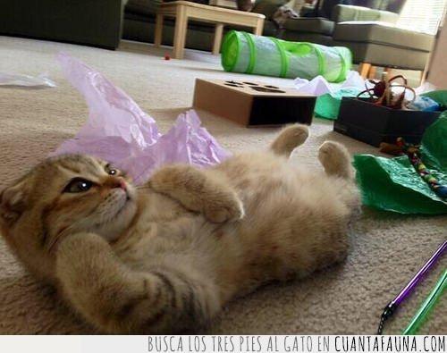 apoyar,contar,estirado,estirar,gato,más,pata,postura,suelo