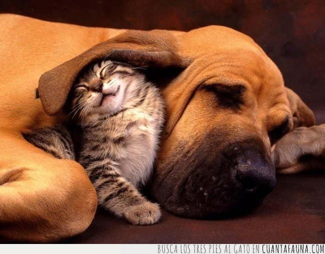 colcha,dormir,edredón,estación,gato,hora,oreja,perro,tapar,temperatura,tiempo