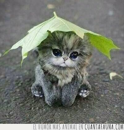 cabeza,cachorro,cría,gato,gris,hoja,sombrero,tapar,tener,verde