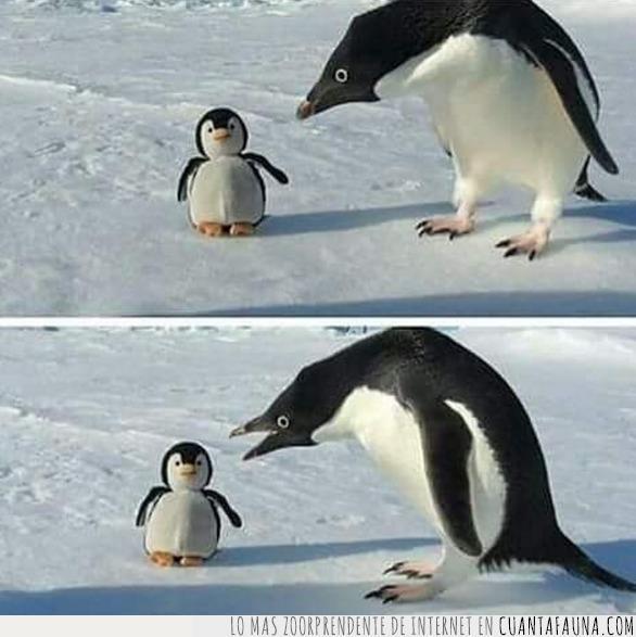 conversación,discusión,hablar,muñeco,pequeño,pingüino