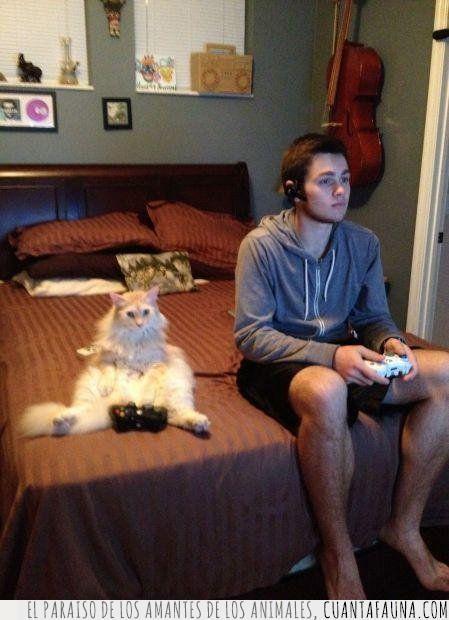 amigo,consola,gato,jugar,mando,mejor