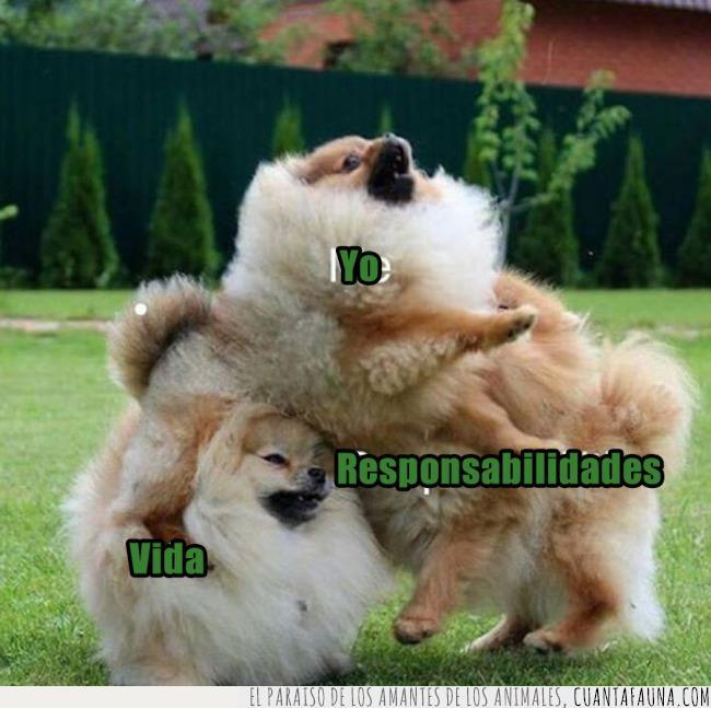 esquema,meme,metáfora,perros,responsabilidades,vida,yo