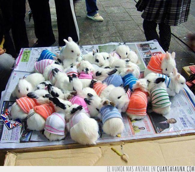 abrigo,blancos,conejos,crías,fiarse,fresco,jersey,pequeños,ropa,vestir