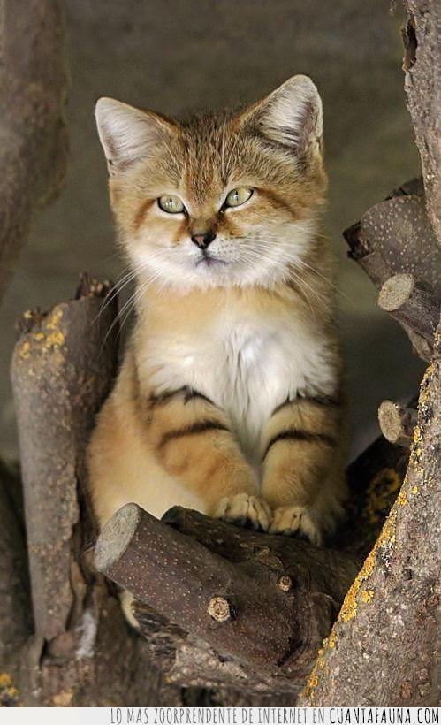bonito,color,desierto,gato,rallas,rama,tronco,zorro